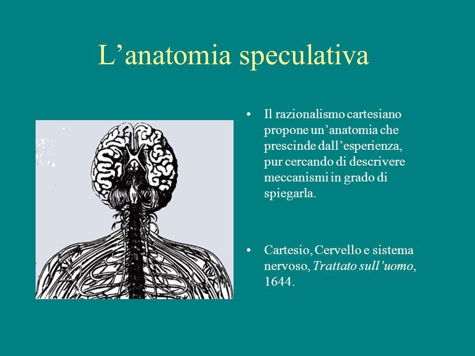 Lanatomia speculativa Il razionalismo cartesiano propone unanatomia che prescinde dallesperienza, pur cercando di descrivere meccanismi in grado di sp
