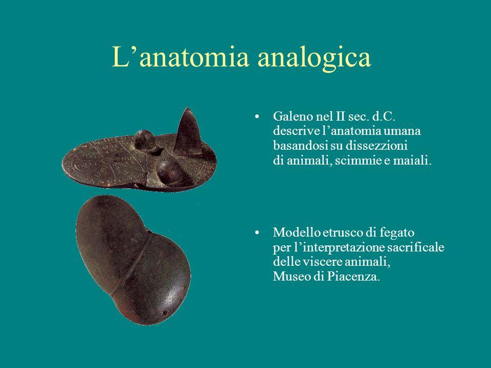 Lanatomia analogica Galeno nel II sec. d.C. descrive lanatomia umana basandosi su dissezzioni di animali, scimmie e maiali. Modello etrusco di fegato