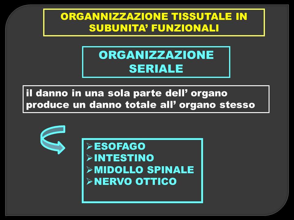 ORGANNIZZAZIONE TISSUTALE IN SUBUNITA FUNZIONALI ORGANIZZAZIONE SERIALE il danno in una sola parte dell organo produce un danno totale all organo stes