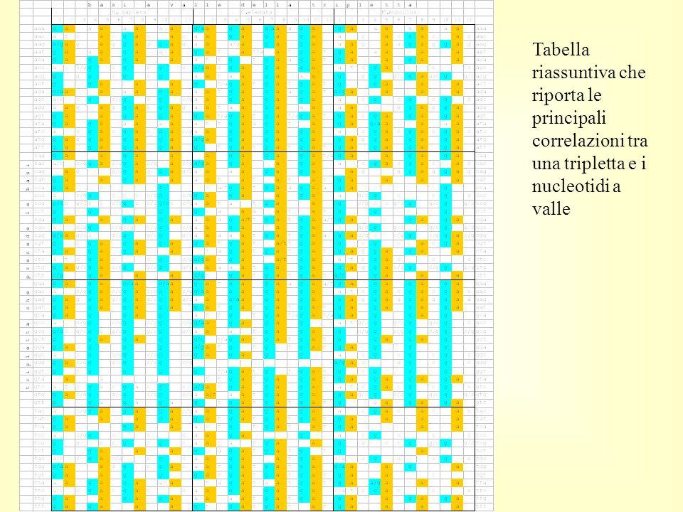 Tabella riassuntiva che riporta le principali correlazioni tra una tripletta e i nucleotidi a valle