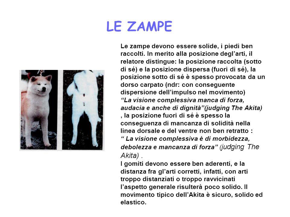 LE ZAMPE Le zampe devono essere solide, i piedi ben raccolti. In merito alla posizione deglarti, il relatore distingue: la posizione raccolta (sotto d