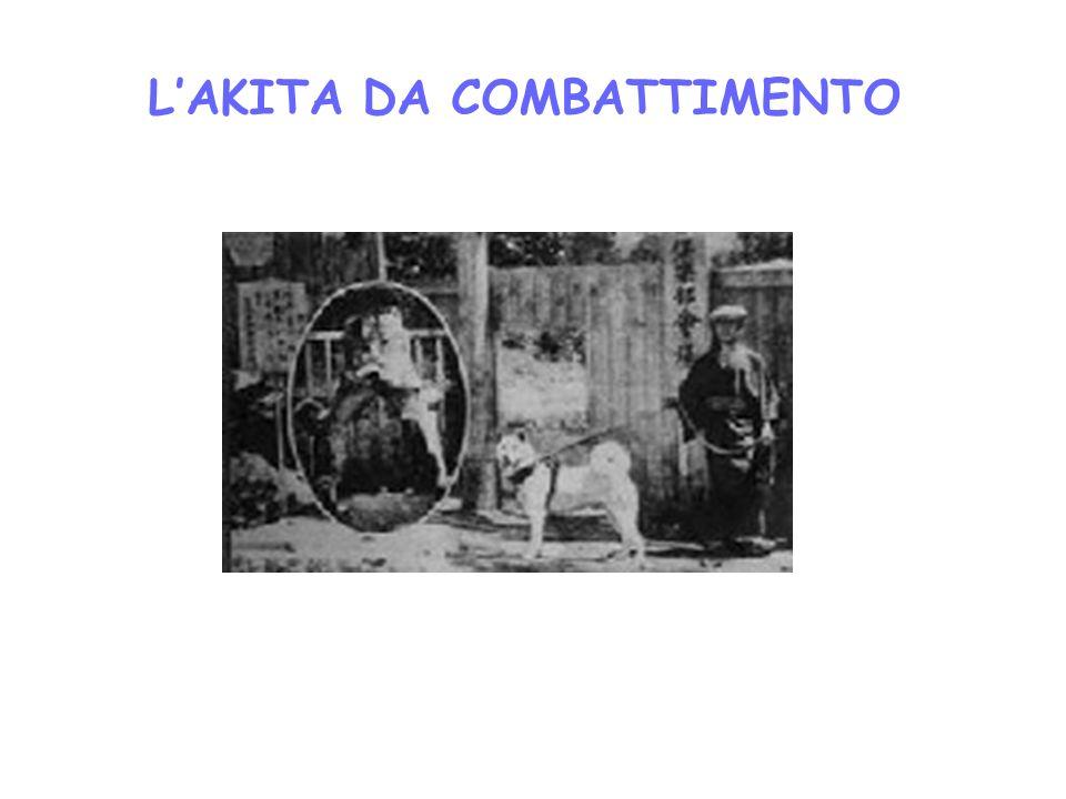LAKITA DA COMBATTIMENTO