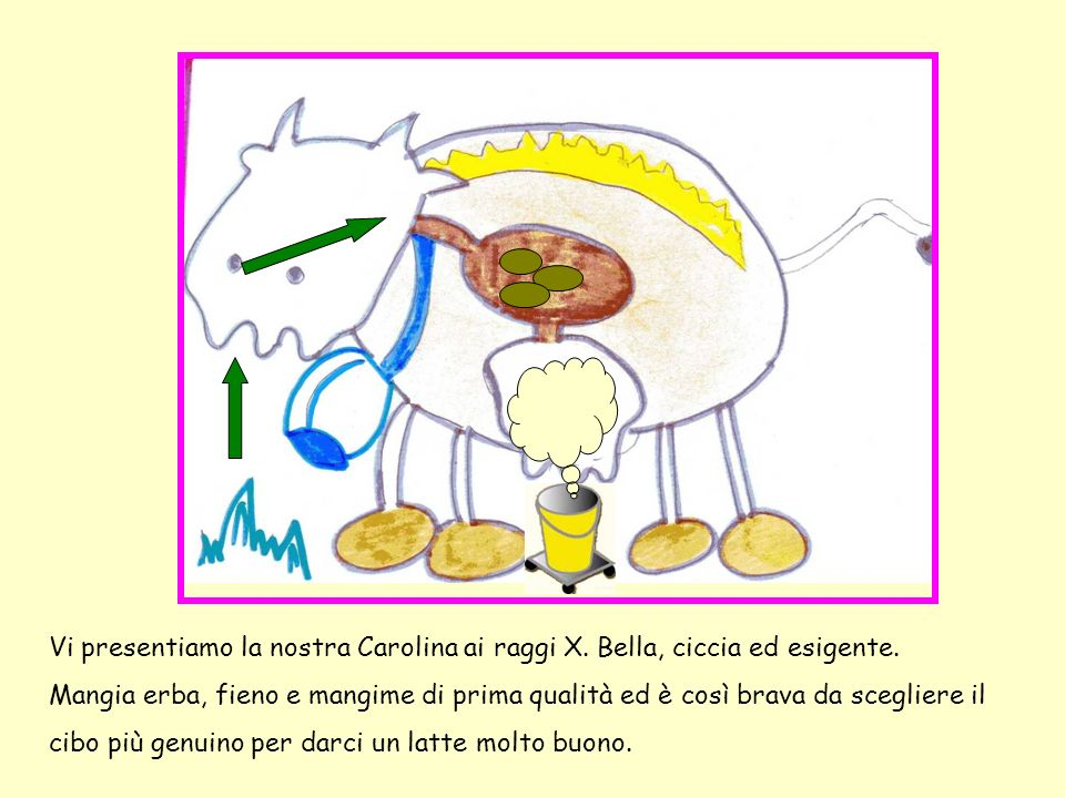 Vi presentiamo la nostra Carolina ai raggi X. Bella, ciccia ed esigente. Mangia erba, fieno e mangime di prima qualità ed è così brava da scegliere il