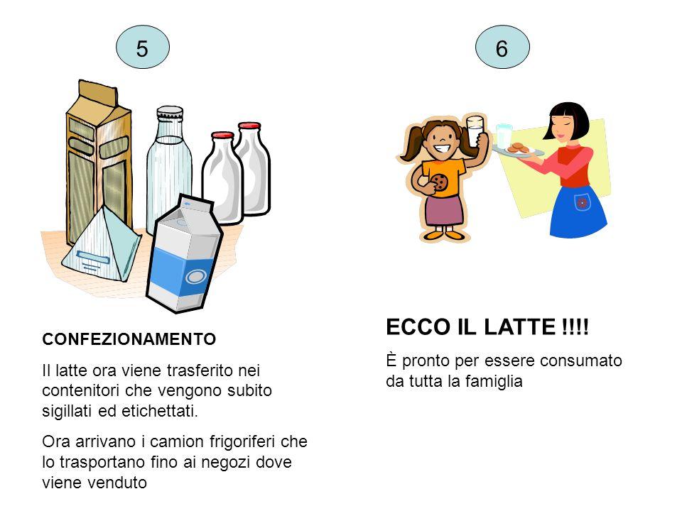 CONFEZIONAMENTO Il latte ora viene trasferito nei contenitori che vengono subito sigillati ed etichettati. Ora arrivano i camion frigoriferi che lo tr