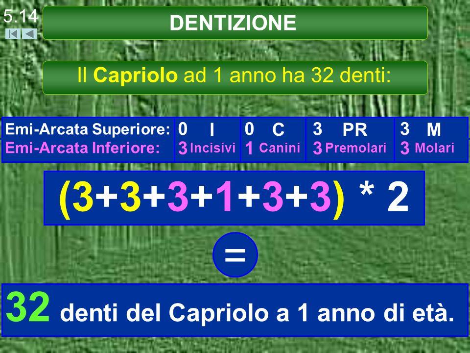 DENTIZIONE 5.14 Il Capriolo ad 1 anno ha 32 denti: Emi-Arcata Superiore: Emi-Arcata Inferiore: 0 3 I Incisivi 0 1 C Canini 3 3 PR Premolari 3 3 M Mola