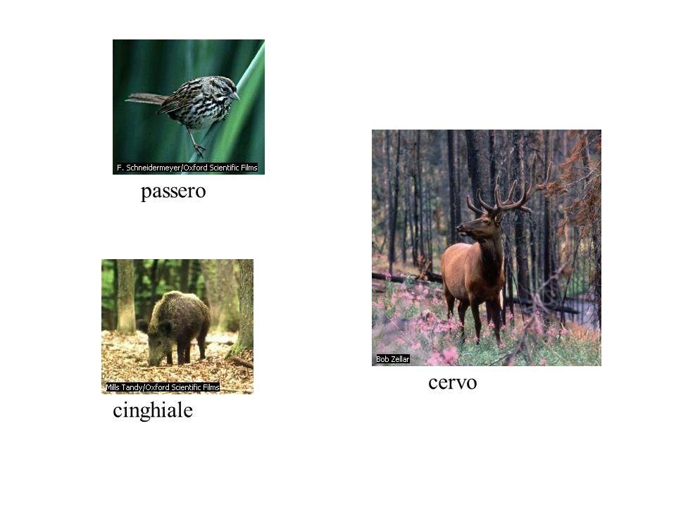 cinghiale cervo passero