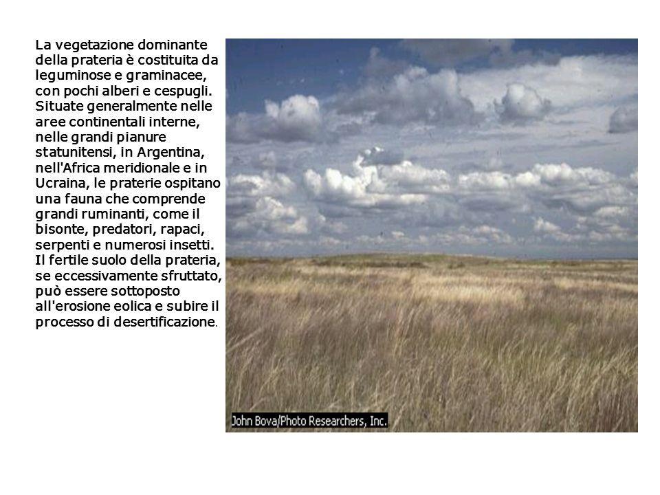 La vegetazione dominante della prateria è costituita da leguminose e graminacee, con pochi alberi e cespugli. Situate generalmente nelle aree continen