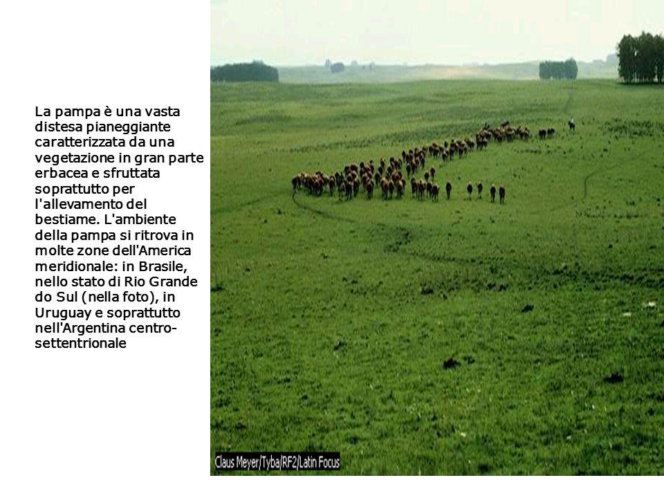 La pampa è una vasta distesa pianeggiante caratterizzata da una vegetazione in gran parte erbacea e sfruttata soprattutto per l'allevamento del bestia
