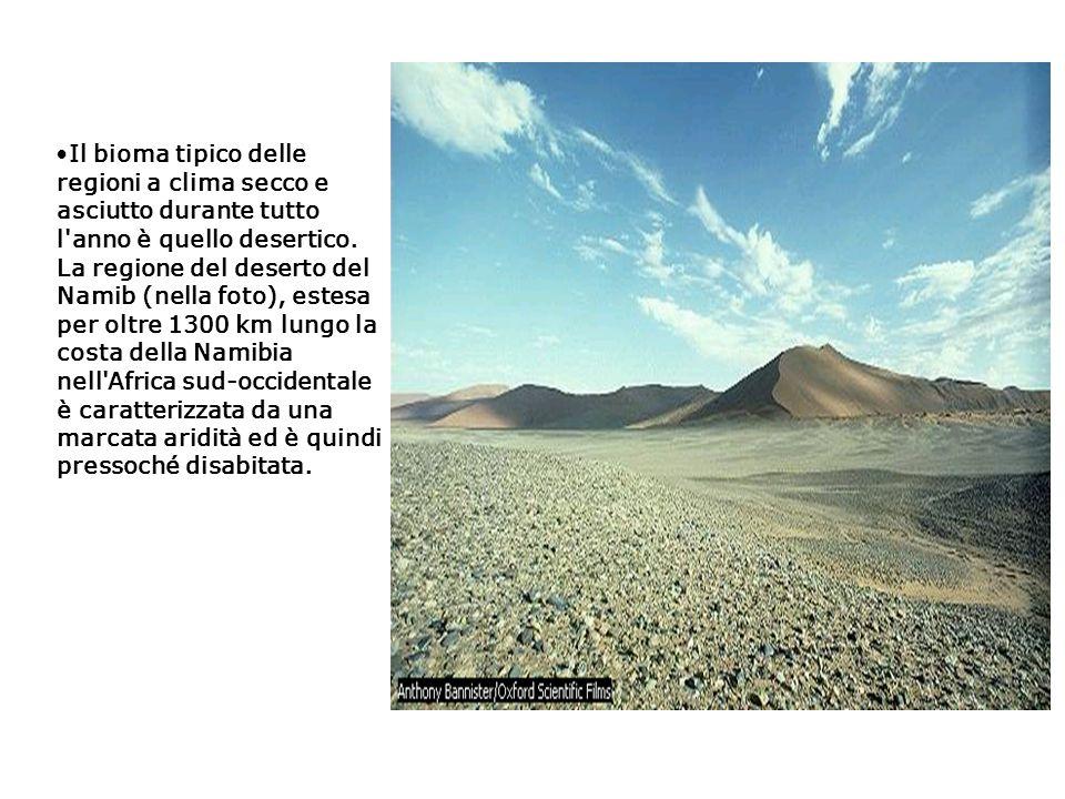 Il bioma tipico delle regioni a clima secco e asciutto durante tutto l'anno è quello desertico. La regione del deserto del Namib (nella foto), estesa