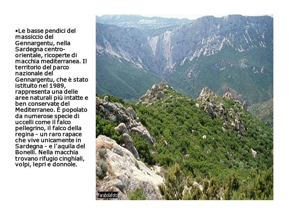 Le basse pendici del massiccio del Gennargentu, nella Sardegna centro- orientale, ricoperte di macchia mediterranea. Il territorio del parco nazionale