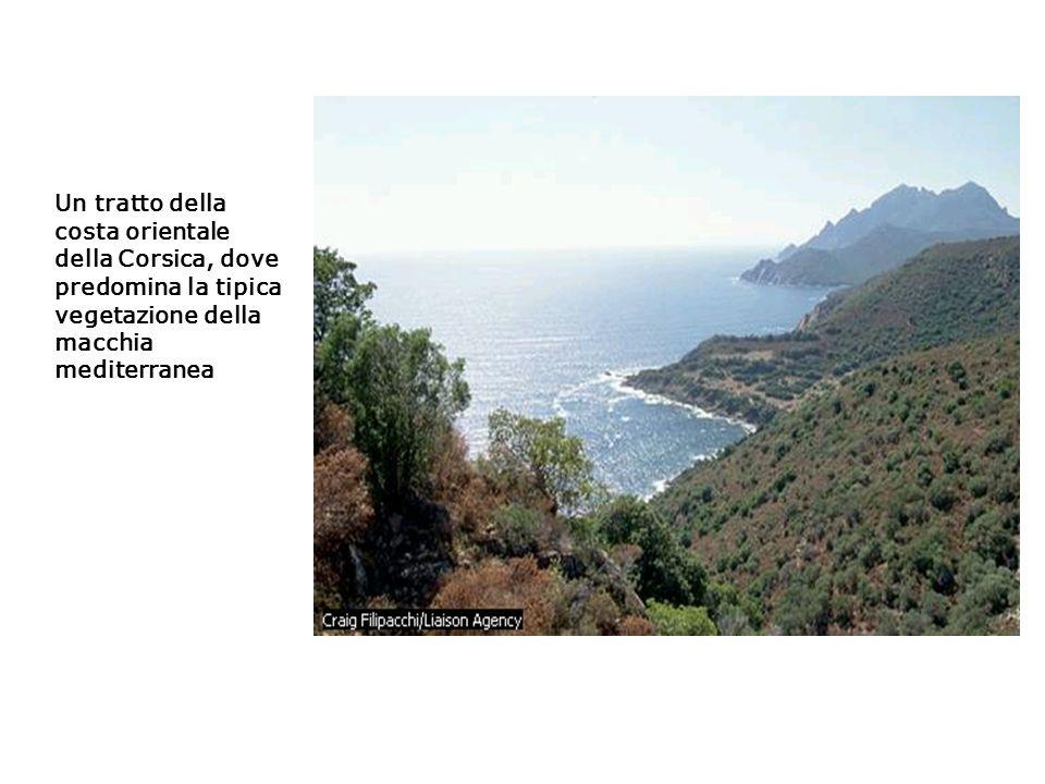 Un tratto della costa orientale della Corsica, dove predomina la tipica vegetazione della macchia mediterranea