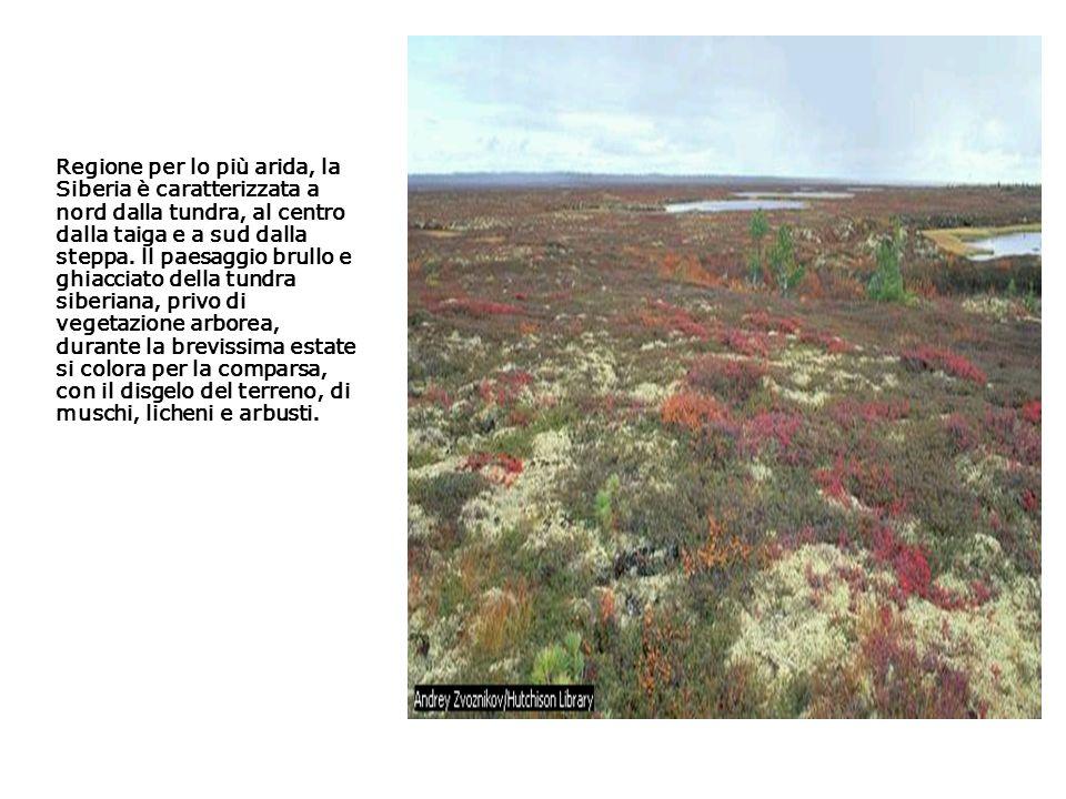 La pecora di Dall, simile al bue muschiato e alla capra di montagna, abita le regioni artiche montuose dell Alaska e dello Yukon.