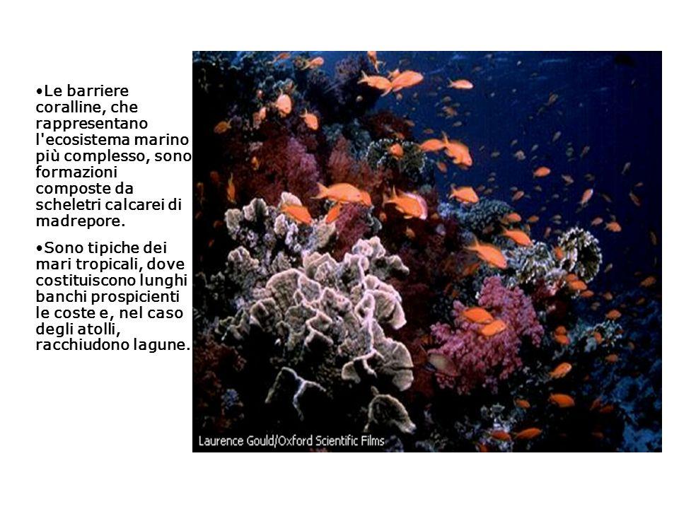 Le barriere coralline, che rappresentano l'ecosistema marino più complesso, sono formazioni composte da scheletri calcarei di madrepore. Sono tipiche