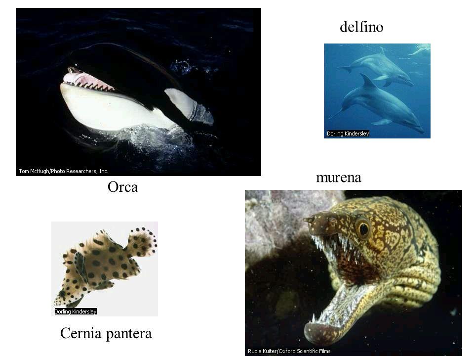 delfino murena Cernia pantera Orca