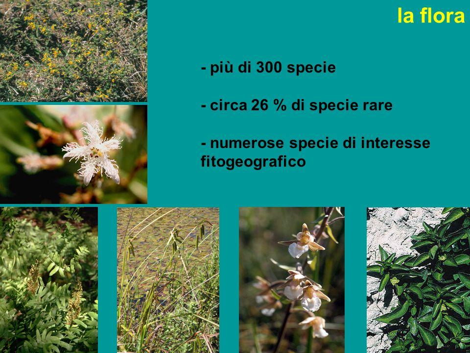 la flora - più di 300 specie - circa 26 % di specie rare - numerose specie di interesse fitogeografico