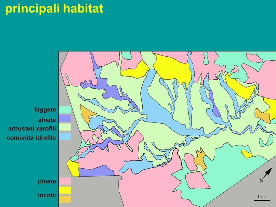 faggete alnete arbusteti xerofili pinete incolti comunità idrofile principali habitat