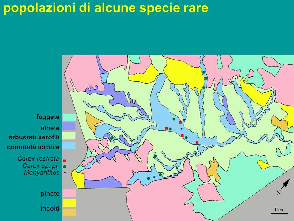 Carex rostrata Carex sp.pl.