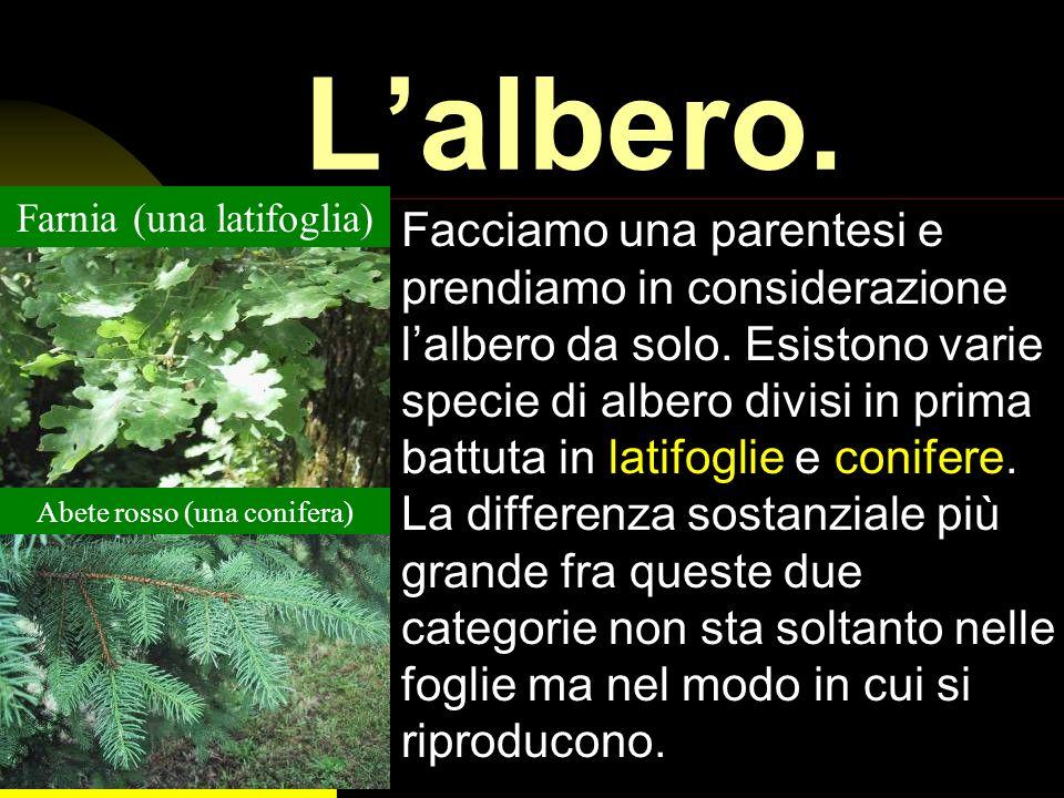 - Il bosco è anche lunico posto in cui molti animali, grandi e piccoli, possono vivere. Alcuni si servono di alberi grandi, altri di più piccoli, altr