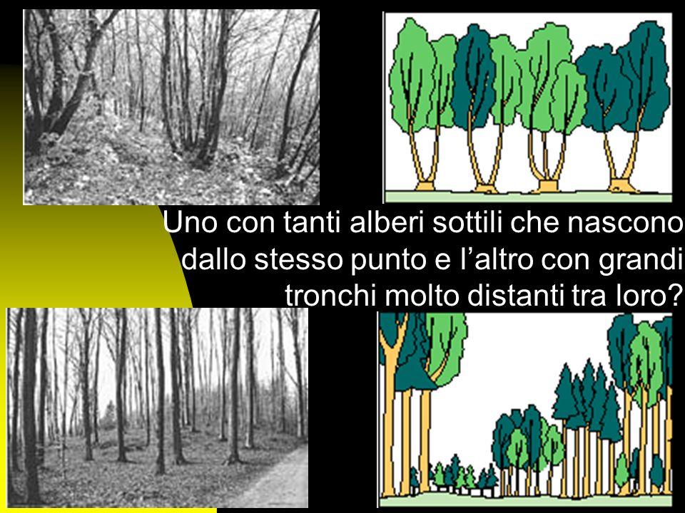 Forme di governo Ma i boschi sono tutti uguali? Perché, ad esempio, questi boschi di castagno sono così diversi?