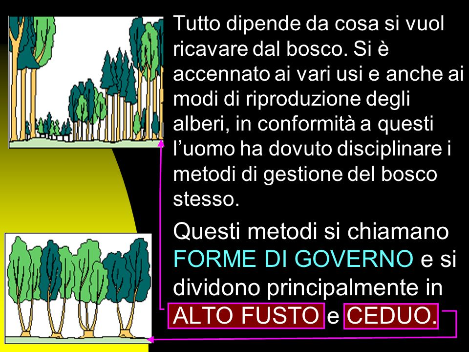 Uno con tanti alberi sottili che nascono dallo stesso punto e laltro con grandi tronchi molto distanti tra loro?