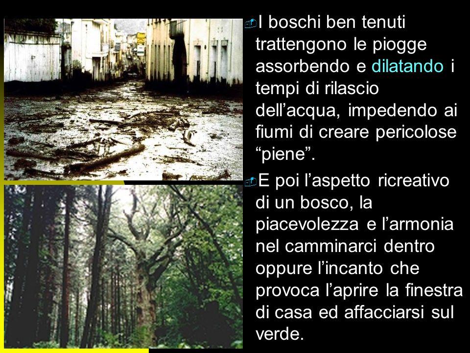n Ma il bosco fornisce anche altri servizi da cui tutti noi traiamo beneficio, anche se non ce ne rendiamo conto: - Il bosco pulisce laria trasformand