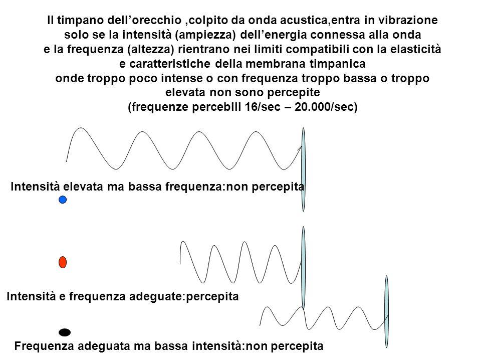 Il timpano dellorecchio,colpito da onda acustica,entra in vibrazione solo se la intensità (ampiezza) dellenergia connessa alla onda e la frequenza (al