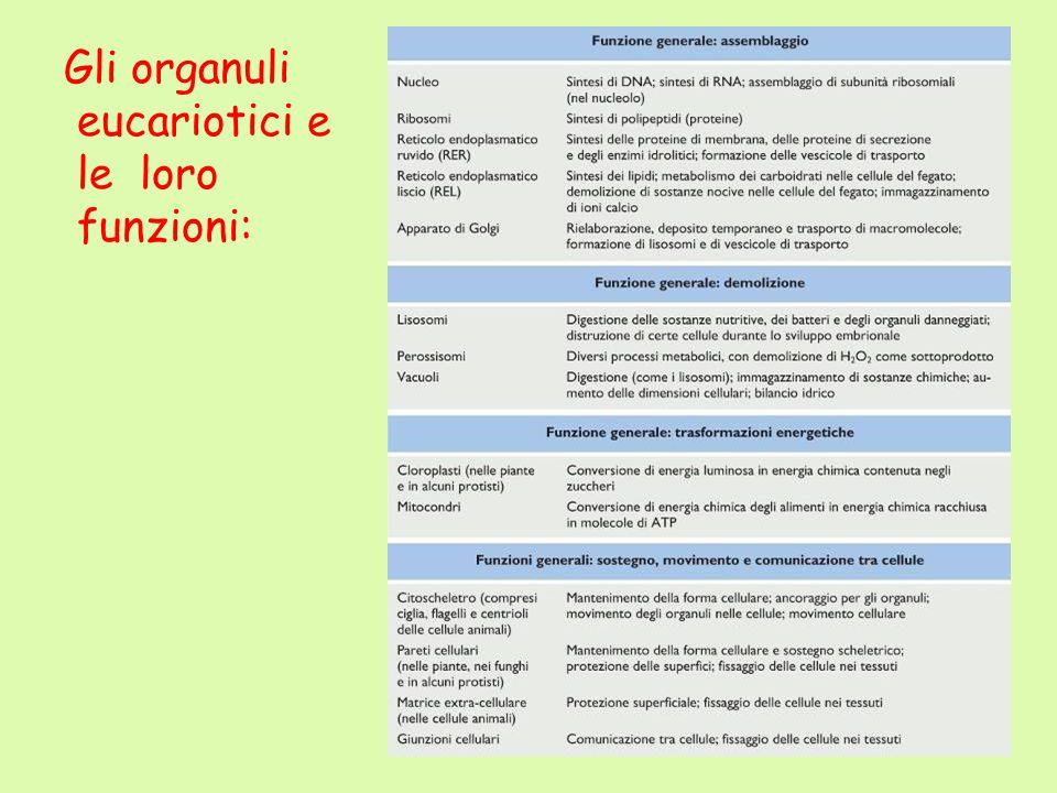 Gli organuli eucariotici e le loro funzioni:
