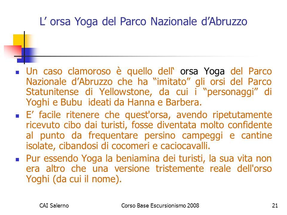 CAI SalernoCorso Base Escursionismo 200821 Un caso clamoroso è quello dell orsa Yoga del Parco Nazionale dAbruzzo che ha imitato gli orsi del Parco St