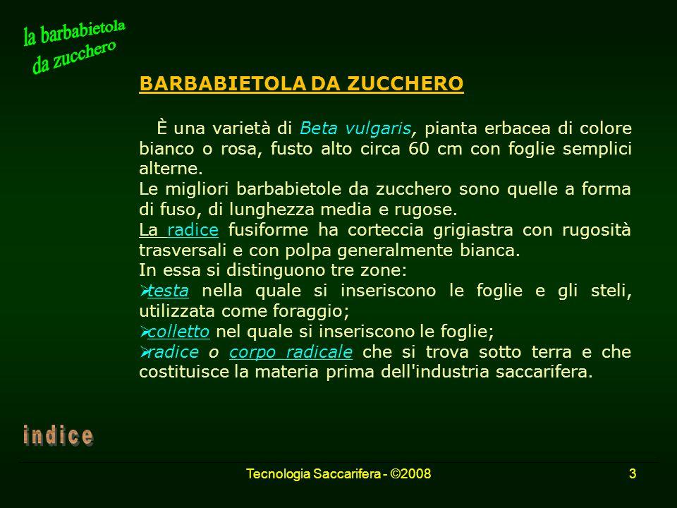 Tecnologia Saccarifera - ©20083 BARBABIETOLA DA ZUCCHERO È una varietà di Beta vulgaris, pianta erbacea di colore bianco o rosa, fusto alto circa 60 c