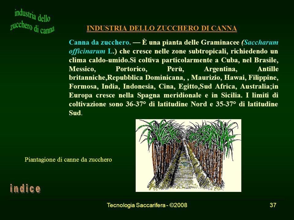 Tecnologia Saccarifera - ©200837 INDUSTRIA DELLO ZUCCHERO DI CANNA Canna da zucchero. È una pianta delle Graminacee (Saccharum officinarum L.) che cre
