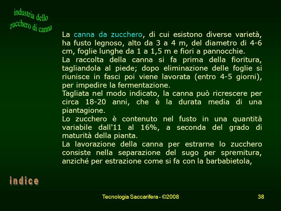 Tecnologia Saccarifera - ©200838 La canna da zucchero, di cui esistono diverse varietà, ha fusto legnoso, alto da 3 a 4 m, del diametro di 4-6 cm, fog