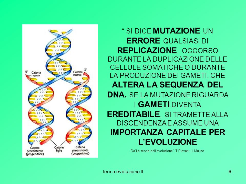 teoria evoluzione II6 SI DICE MUTAZIONE UN ERRORE QUALSIASI DI REPLICAZIONE, OCCORSO DURANTE LA DUPLICAZIONE DELLE CELLULE SOMATICHE O DURANTE LA PROD