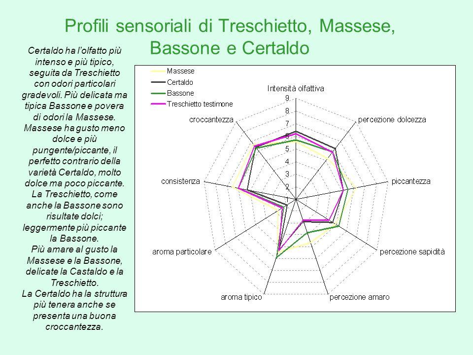 Profili sensoriali di Treschietto, Massese, Bassone e Certaldo Certaldo ha lolfatto più intenso e più tipico, seguita da Treschietto con odori partico