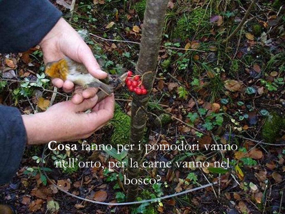 Cosa fanno per i pomodori vanno nellorto, per la carne vanno nel bosco?