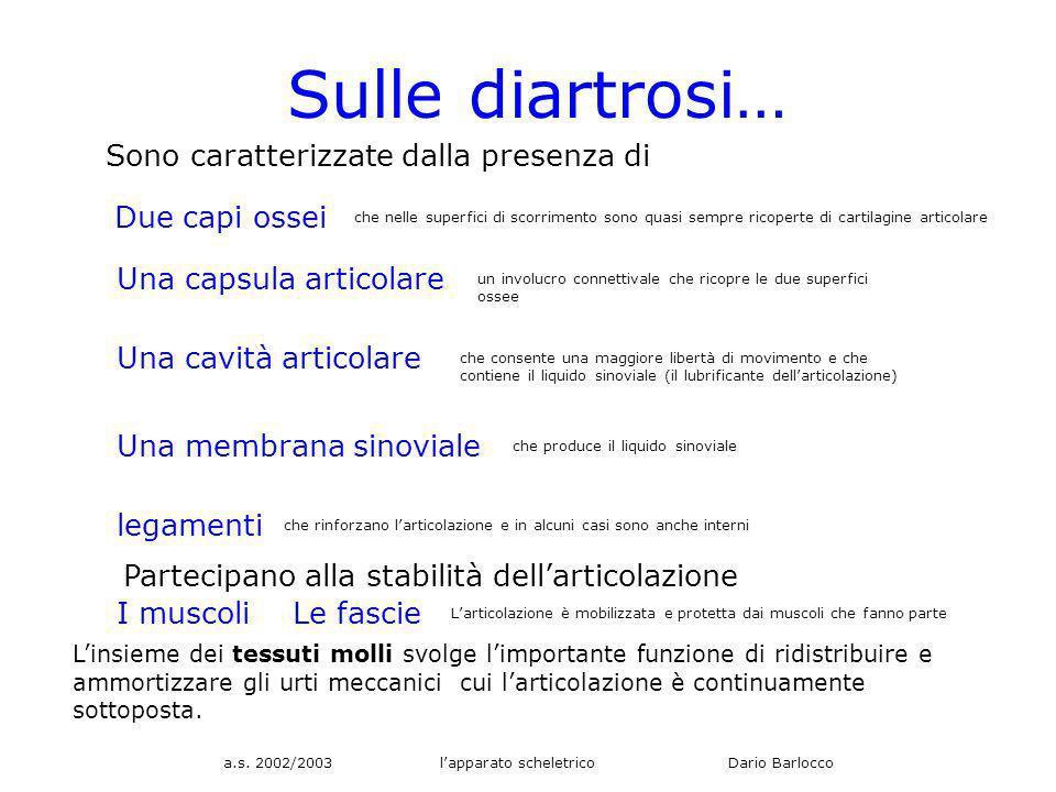 a.s. 2002/2003 lapparato scheletrico Dario Barlocco Sulle diartrosi… Sono caratterizzate dalla presenza di Due capi ossei che nelle superfici di scorr