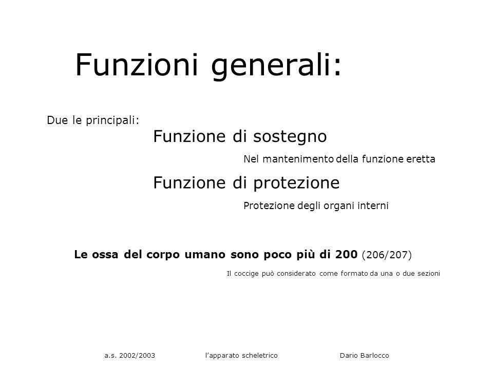 a.s. 2002/2003 lapparato scheletrico Dario Barlocco Funzioni generali: Due le principali: Funzione di sostegno Funzione di protezione Nel mantenimento