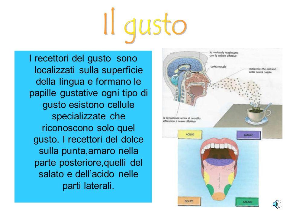 Gli organi di senso mettono in relazione lorganismo con lambiente. Essi sono costituiti da cellule nervose,dette recettori. Nelluomo esistono recettor