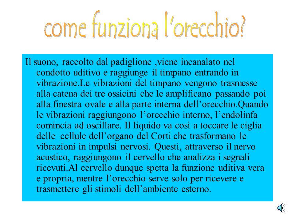 Lorecchio medio è formato da una cavità,detta cassa timpanica,che comunica con la faringe mediante la tromba di Eustachio ha limportante funzione di e