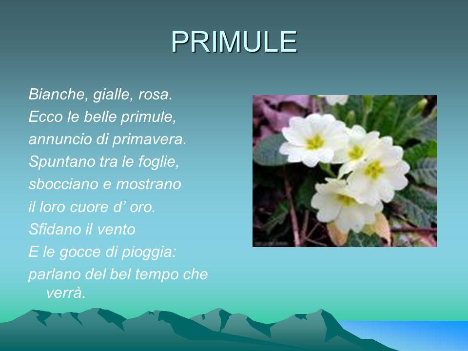 LE VACANZE Oggi sto partendo E il Vesuvio sto salutando Ciao Quarto, ciao Napoli Ci vediamo ad agosto.