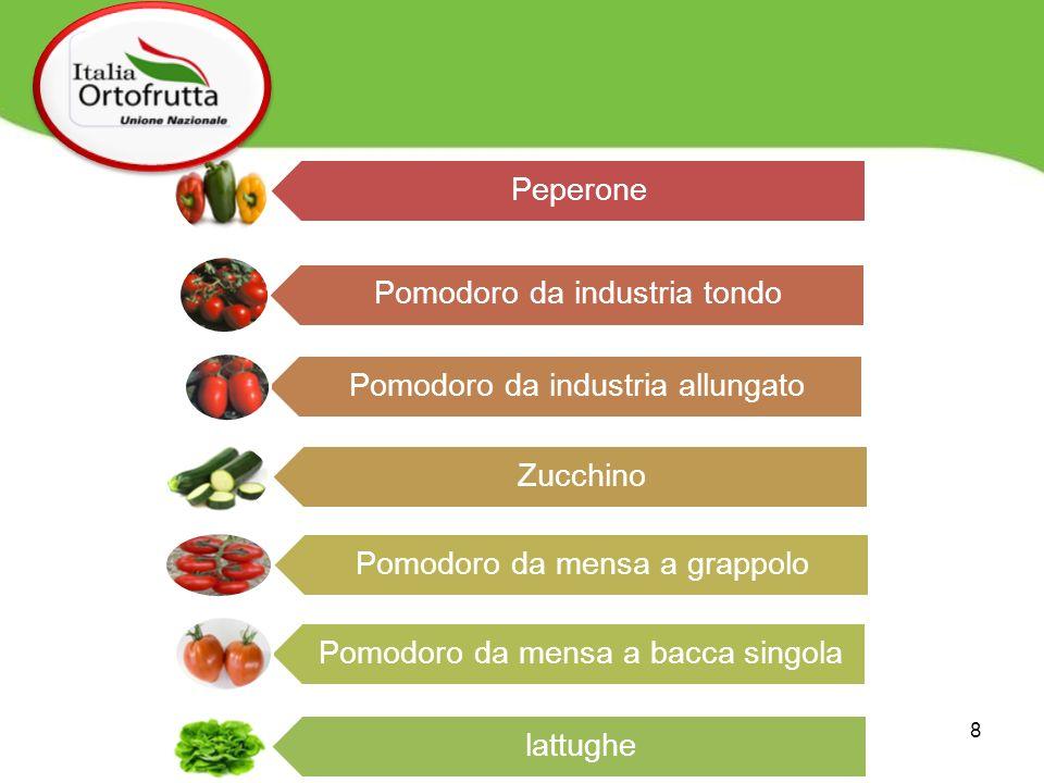 Peperone Pomodoro da industria tondo Pomodoro da industria allungato Zucchino Pomodoro da mensa a grappolo Pomodoro da mensa a bacca singola lattughe