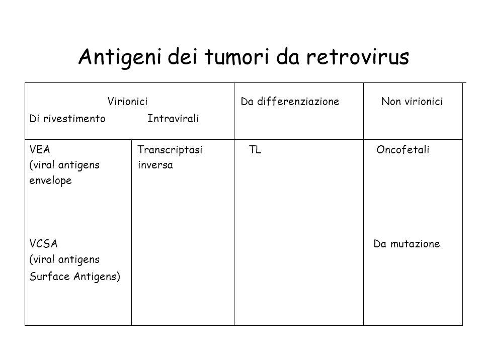 Antigeni dei tumori da retrovirus Virionici Da differenziazione Non virionici Di rivestimento Intravirali VEA Transcriptasi TL Oncofetali (viral antig