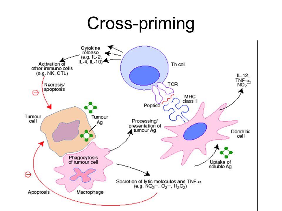 Cross-priming