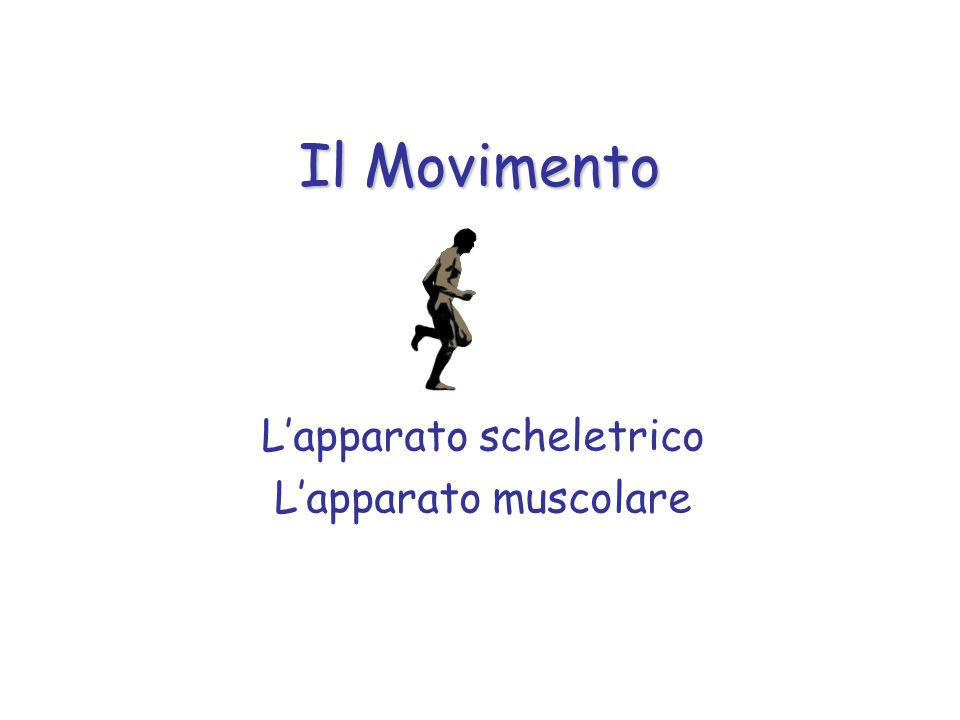 Il Movimento Lapparato scheletrico Lapparato muscolare