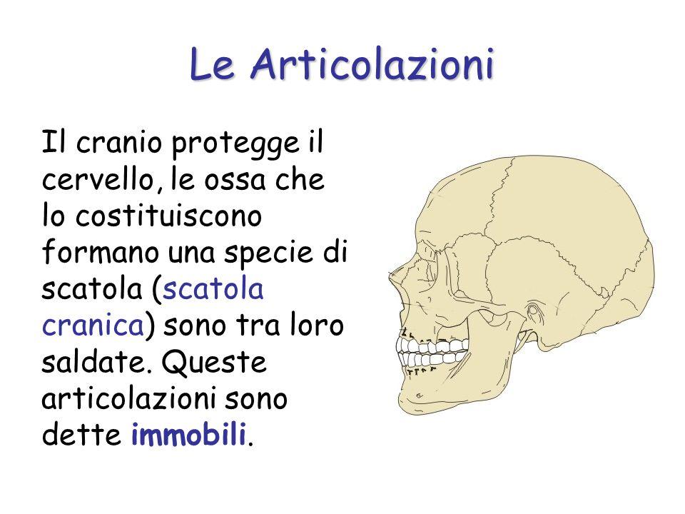 Il cranio protegge il cervello, le ossa che lo costituiscono formano una specie di scatola (scatola cranica) sono tra loro saldate. Queste articolazio