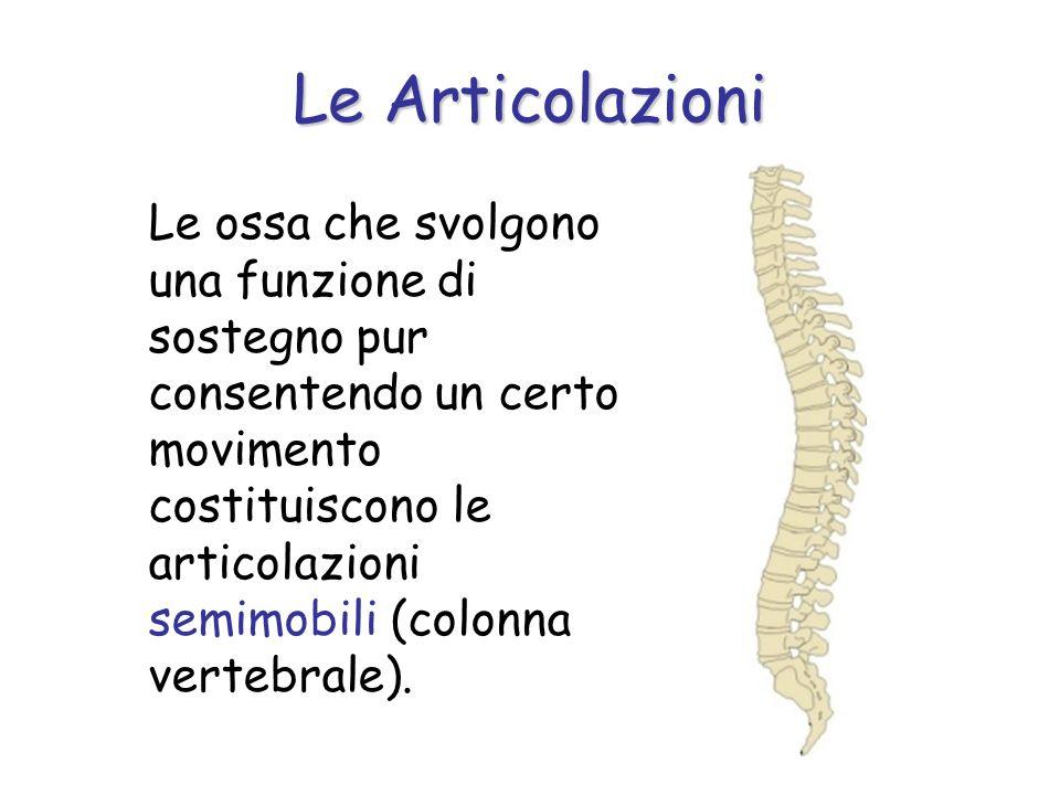 Le ossa che svolgono una funzione di sostegno pur consentendo un certo movimento costituiscono le articolazioni semimobili (colonna vertebrale). Le Ar