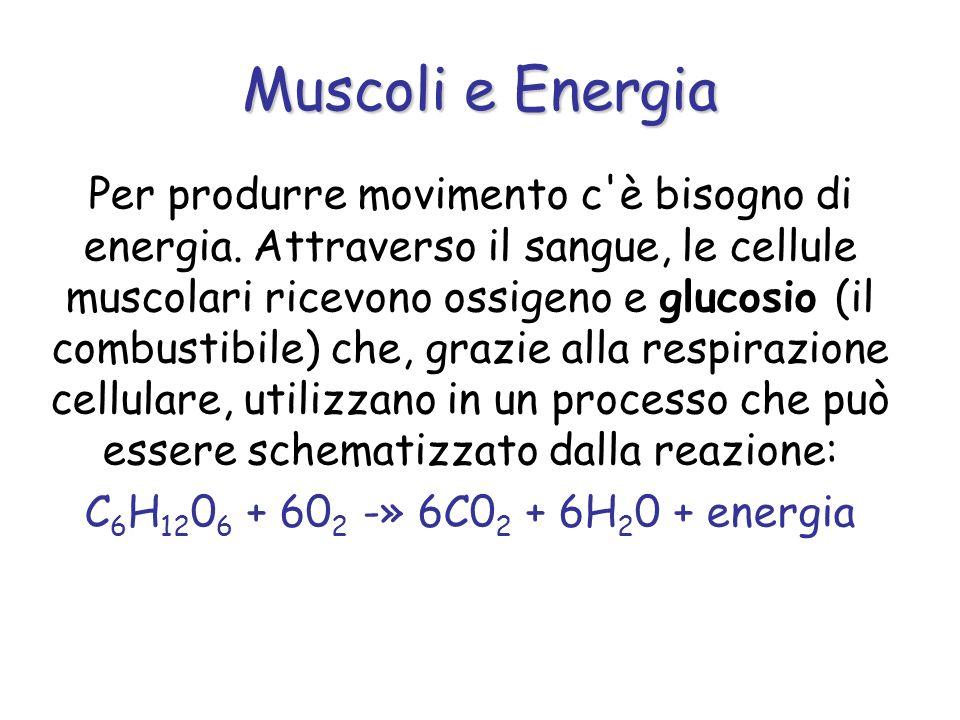 Per produrre movimento c'è bisogno di energia. Attraverso il sangue, le cellule muscolari ricevono ossigeno e glucosio (il combustibile) che, grazie a