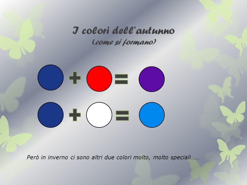 I colori dellautunno (come si formano) Però in inverno ci sono altri due colori molto, molto speciali……