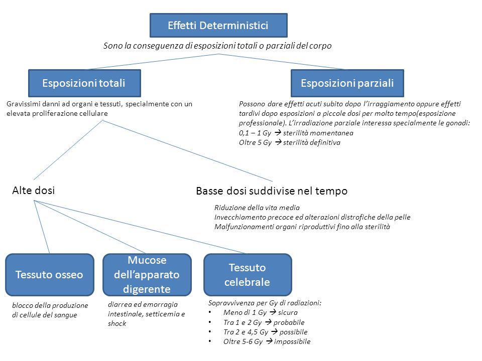 Effetti Deterministici Esposizioni totaliEsposizioni parziali Sono la conseguenza di esposizioni totali o parziali del corpo Gravissimi danni ad organ