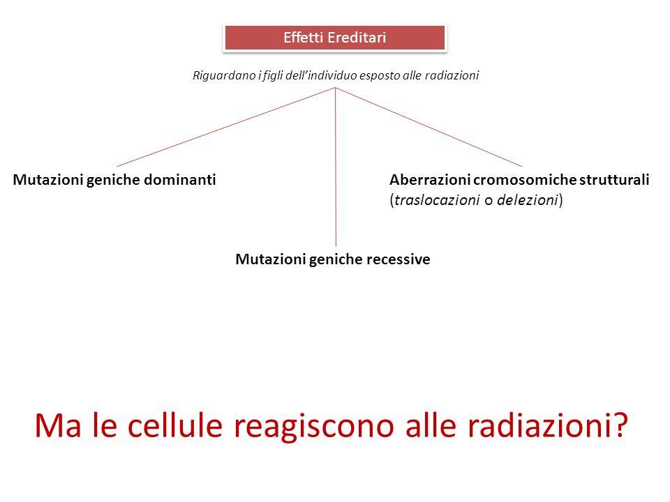 Effetti Ereditari Riguardano i figli dellindividuo esposto alle radiazioni Mutazioni geniche dominanti Mutazioni geniche recessive Aberrazioni cromoso