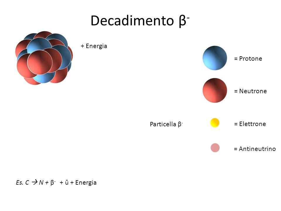 = Protone = Neutrone = Elettrone = Antineutrino Decadimento β - + Energia Es. C N + β - + ū + Energia Particella β -